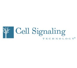 cell+signaling